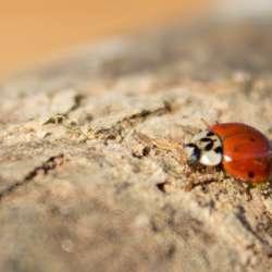 Problèmes de Coléoptères - Extermination Leblanc