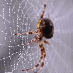 Problèmes d'araignées ? - Extermination Leblanc
