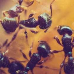 Problèmes de fourmis - Extermination Leblanc