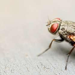 Problèmes de mouches ?