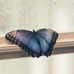 Problèmes de papillons - Extermination Leblanc