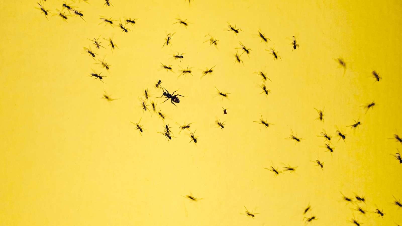 crawling ants